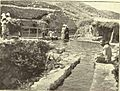 Elisha fountian jerico 1906.jpg
