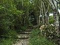 Entra en el bosque (44362712114).jpg