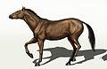 Equus conversidens.jpg