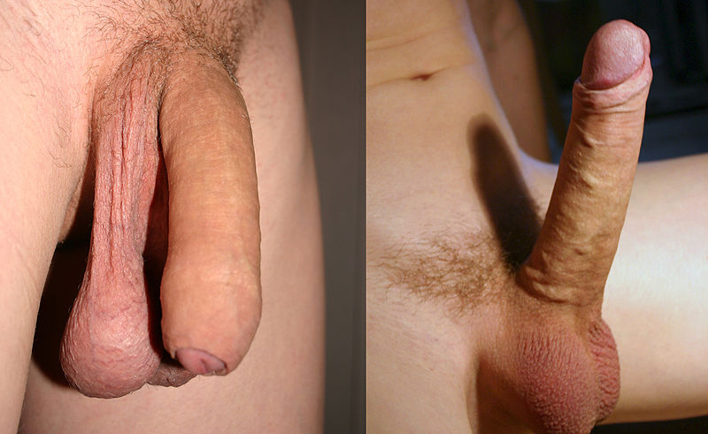 flaccid erection big dick