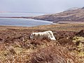Ewe and Lamb by Loch Craggie - geograph.org.uk - 158619.jpg