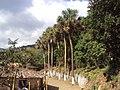 FINCA EL PEÑON DE COMASAGUA - panoramio.jpg