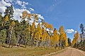 Fall Color on the Kaibab Plateau.jpg