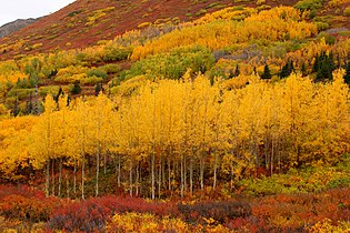 4405a45bc5efdf Autumn colors along the Eagle River near Anchorage