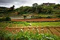 Farm land in Da Lat, Vietnam.JPG