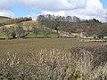 Farndale - panoramio (3).jpg