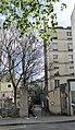 Faux ru. Rue Geoffroy-St-Hilaire.jpg