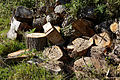 Feeringbury Manor log pile, Feering Essex England 2.jpg