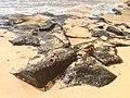 Fernando de Noronha Insel crab (21592573394).jpg