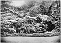 Fernery at Ermita (c. 1900, Philippines).jpg