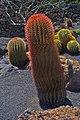 Ferocactus stainesii 01.jpg