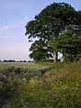 Field edge, Hickling - geograph.org.uk - 199670.jpg