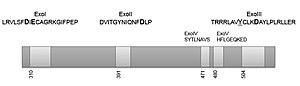 POLD1 - Image: Figure 2 exonucleases