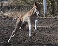 Finn foal.jpg