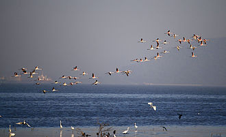 Sewri Fort - Image: Flamingoes Sewri