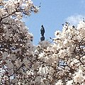 Flickr - USCapitol - Blue sky, trees in full flower. Freedom from Library of Congress..jpg