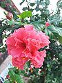 Flor de planta de jardim.jpg