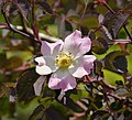 Flora (5) (29993935377).jpg