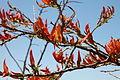 Flora Madagaskar 07.JPG