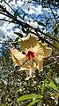 Flores do Cerrado 08.jpg
