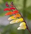 Flower (4764913798).jpg