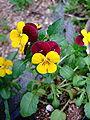 Flower 144549.jpg