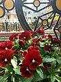 Flower 41 HDR.jpg