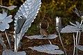 Flower Sculpture with Squirrel 2 (11213126124).jpg
