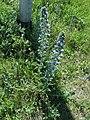 Flowers, IJmuiden - panoramio.jpg