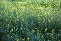 Flowers - 花(はな) - Flickr - TANAKA Juuyoh (田中十洋).jpg