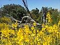 Flowers - Fiori (18179076886).jpg