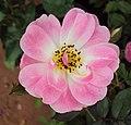 Flowers - Uncategorised Garden plants 161.JPG