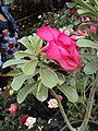 Flowers - Uncategorised Garden plants 169.JPG