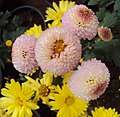Flowers - Uncategorised Garden plants 47.JPG