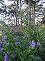 Flowers in Dalat 2.jpg