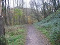 Footpath, Castle Eden Dene - geograph.org.uk - 282942.jpg