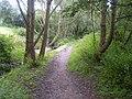 Footpath through the trees - geograph.org.uk - 924377.jpg