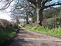 Footpath to Twelve Acre Copse, King's Lane, Ansty - geograph.org.uk - 360847.jpg