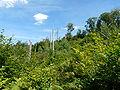 Forêt de Rambervillers-Séquelles de la tempête.JPG