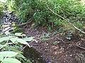 Forbachs einer trocken gefallener Mündungsarm.jpg