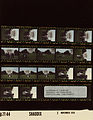 Ford B2144 NLGRF photo contact sheet (1976-11-03)(Gerald Ford Library).jpg