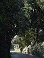 Forder Lane, Bishopsteignton - geograph.org.uk - 676029.jpg