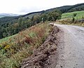 Forest Track - geograph.org.uk - 643328.jpg