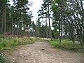 Forest Track in Strathnairn - geograph.org.uk - 219668.jpg