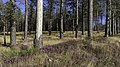Forest in Haut-Languedoc, Rosis cf03.jpg