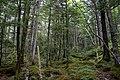 Forest in Yatsugatake 05.jpg