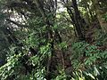 Forest on Mount Atagoyama 20150614.JPG