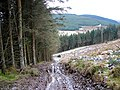 Forestry track on the slopes of Drum Maen - geograph.org.uk - 1113878.jpg
