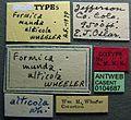 Formica obtusopilosa casent0104687 label 1.jpg