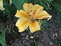 Fotky květů (02).jpg
